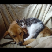 1316524244_cat_and_dog_on_a_chair_by_coconutbou.jpg